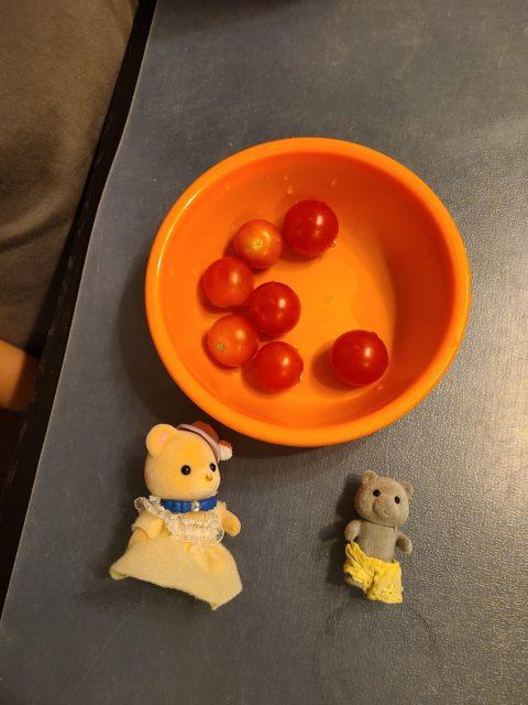 トマト収穫3回目!